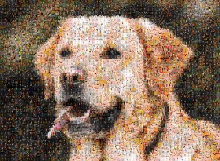 Photo mosaic of dog